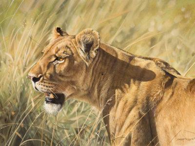 David Wildlife Art1